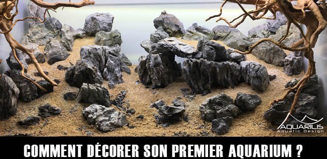 Comment décorer son aquarium ?
