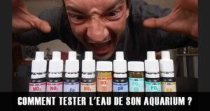Comment tester l'eau de son aquarium ?